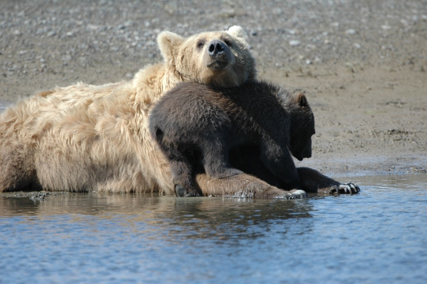 Text and Wildlife Photo ©Jim Robertson