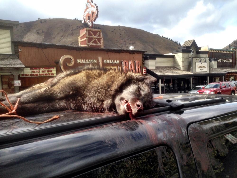 Wolf_kill_on_vehicle_1