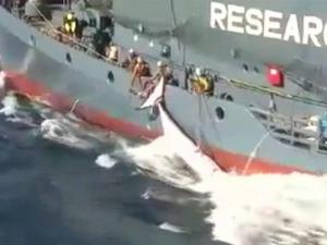 whaling_stand_off_causes_diplomatic_waves_1721713978