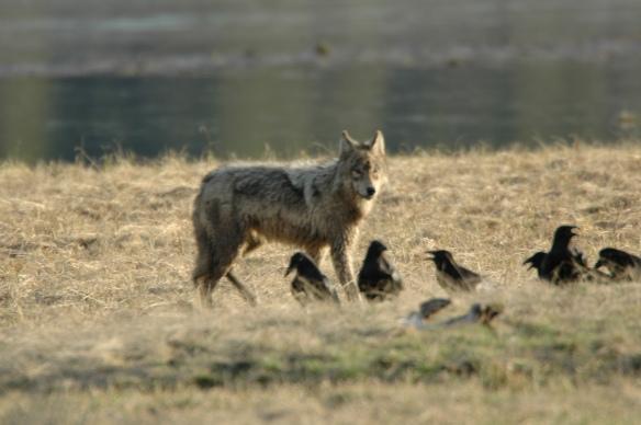 Wildlife Photography ©Jim Robertson