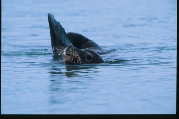 Sea Lion Photo Copyright Jim Robertson