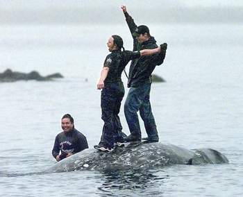 Makah whalers celebrate atop a dead gray whale in Neah Bay after the successful hunt in this May 17, 1999, photo. — Elaine Thompson/The Associated Press