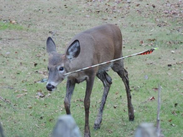 Roadblocks to Raise Funds for Victims of Hunting ...
