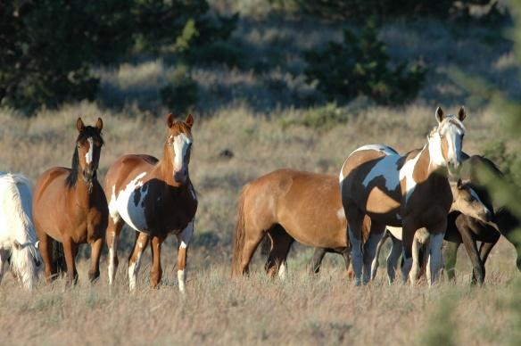 Wild Horse Photo Copyright Jim Robertson