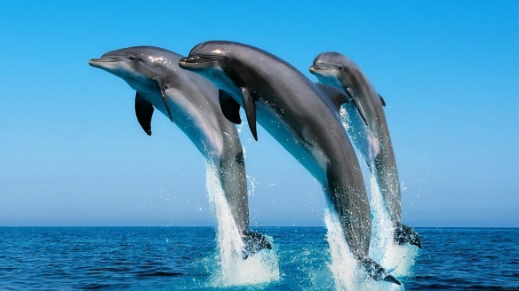 dolphin_228398