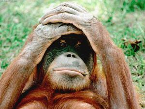orangutan-wallpaper-4