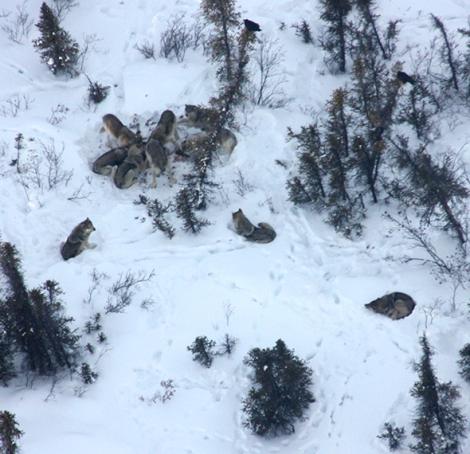Alaskas Lost Creek Pack