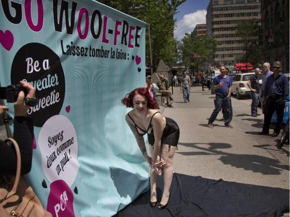 """""""Vegan pinup"""" Audrey Ivory stripped in a burlesque show on Ste-Catherine St. in downtown Montreal, Thursday June 18, 2015. PETA is trying to encourage people to go wool free."""