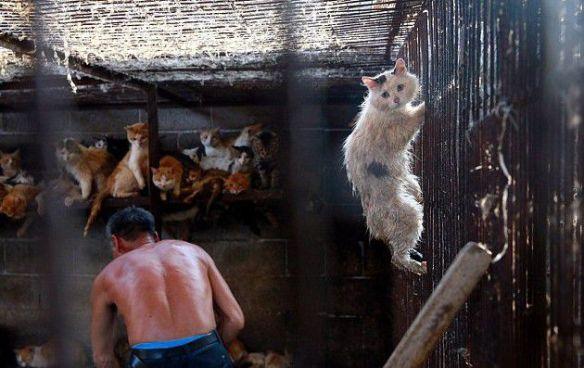 Picture: Washington Animal Rescue League)