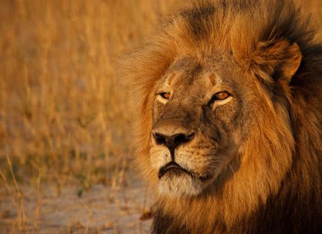 Portrait of Cecil by Ed Hetherington