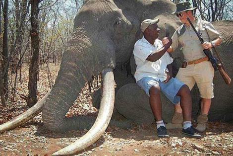 Germna trophy hunter kills one of Africa's biggest elephants Yahoo news