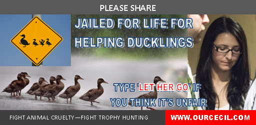duckling jailed