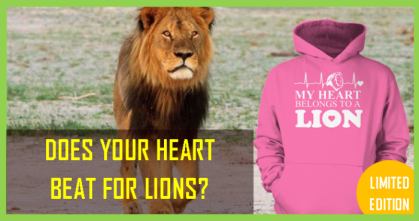 heart beat for lions