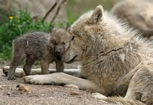 Alpha female mom and pup